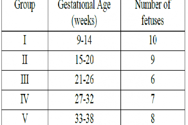 Distribution of Fetuses in different groups according to gestational age